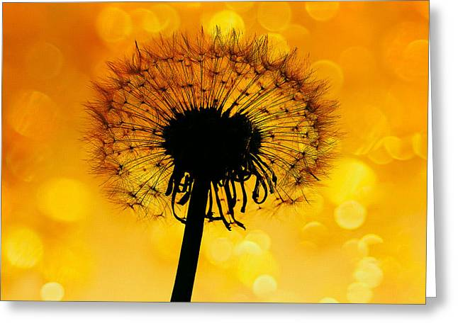 Sunset Abstract Photographs Greeting Cards - Sunset Greeting Card by SK Pfphotography