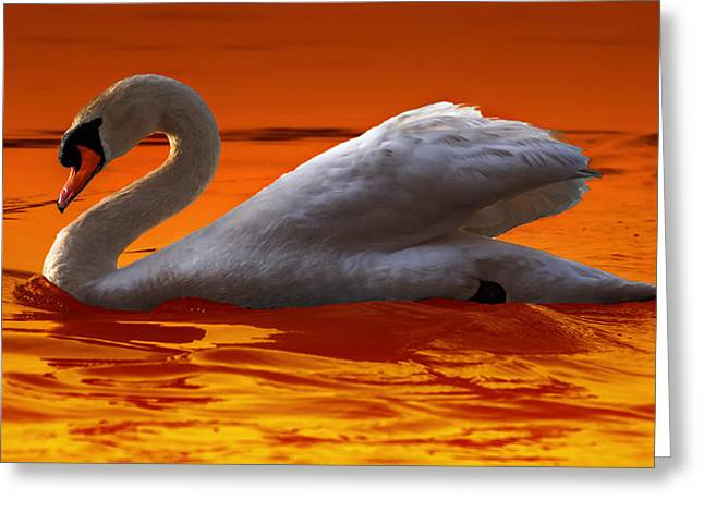 Swans... Greeting Cards - Sunset Swan 3 Greeting Card by Brian Stevens