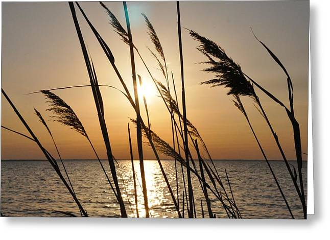 Dune Grass Greeting Cards - Sunset Through the Dune Grass Greeting Card by Bill Cannon