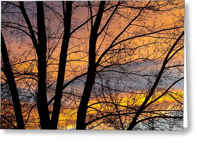 Sunset Prints Greeting Cards - Sunset Through the Tree Silhouette Greeting Card by James BO  Insogna