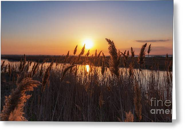 Best Ocean Photography Greeting Cards - Sunset through the wheat  Greeting Card by Michael Ver Sprill