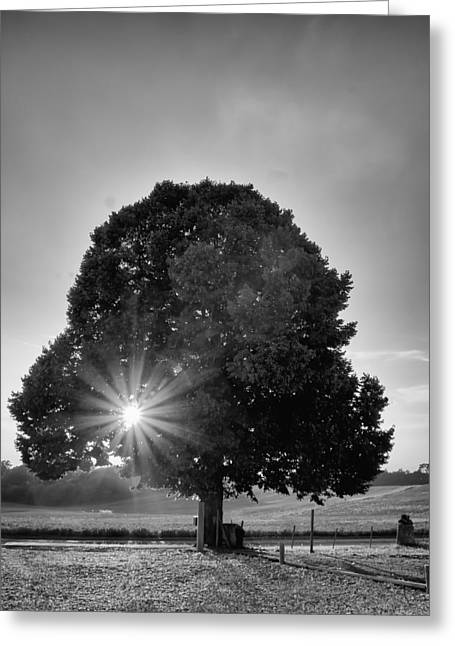 Sunset Posters Greeting Cards - Sunset Tree in Mono Greeting Card by Nomad Art And  Design
