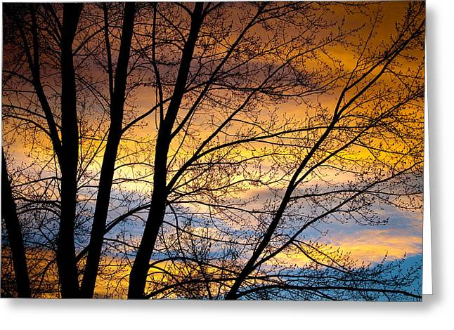 Sunset Prints Greeting Cards - Sunset Tree Silhouette Greeting Card by James BO  Insogna