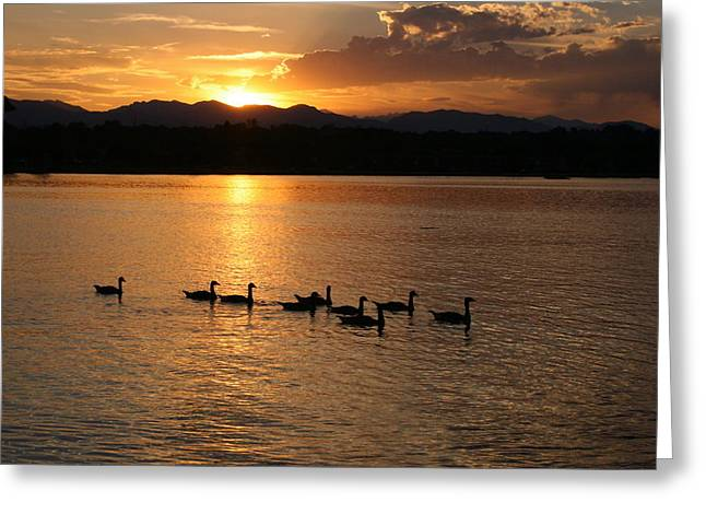 Quite Greeting Cards - Sunset with Geese 2 Greeting Card by Angie Wingerd