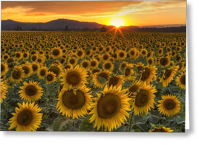 Field. Cloud Greeting Cards - Sunshine and Happiness Greeting Card by Mark Kiver