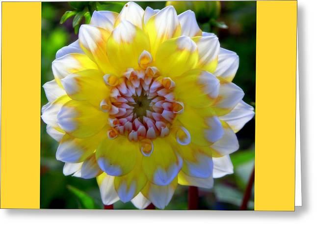 Sunshine Dahlia Greeting Card by KAREN WILES