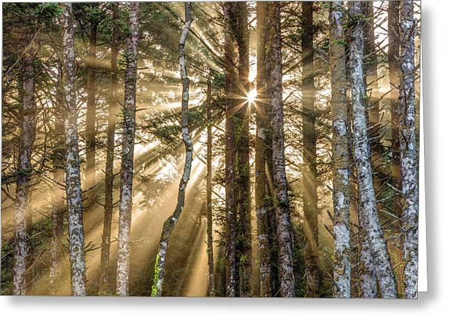 Sunshine Forest Greeting Card by Pierre Leclerc Photography