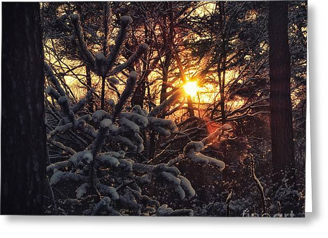 Sunshine Im Winter Greeting Card by SK Pfphotography