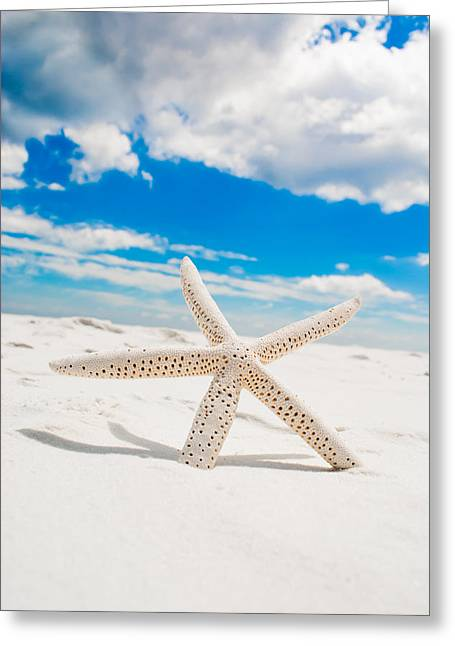 Sunshine In Paradise Greeting Card by Shelby Young