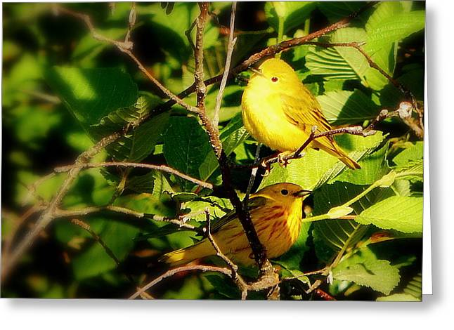 Annapolis Valley Greeting Cards - Sunshine of my eye Greeting Card by Karen Cook