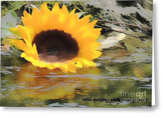 Sunshine On The Water Greeting Card by Tami Quigley