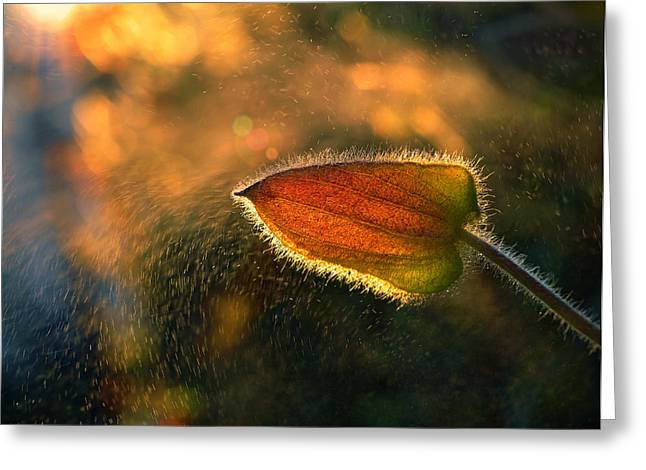Nature Macro Greeting Cards - Sunshine Through The Rain Greeting Card by Tomer Yaffe
