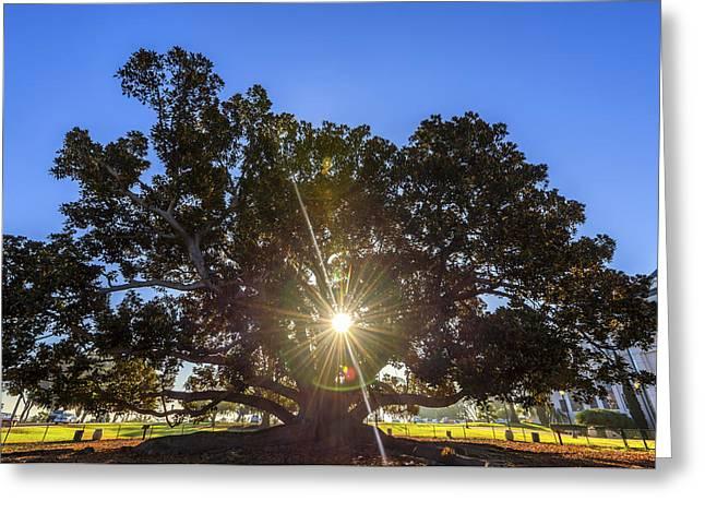 Balboa Park Greeting Cards - Sunstar Greeting Card by Joseph S Giacalone