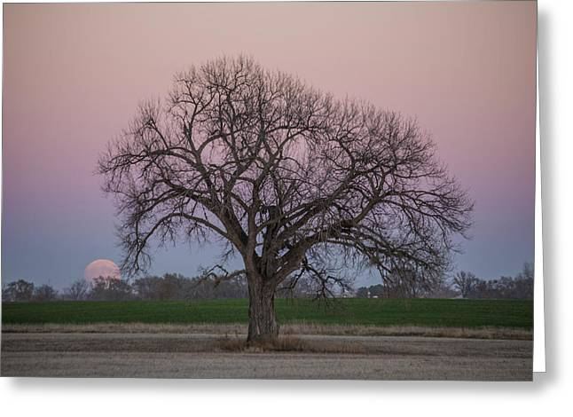 Supermoon Rise Greeting Card by Aaron J Groen