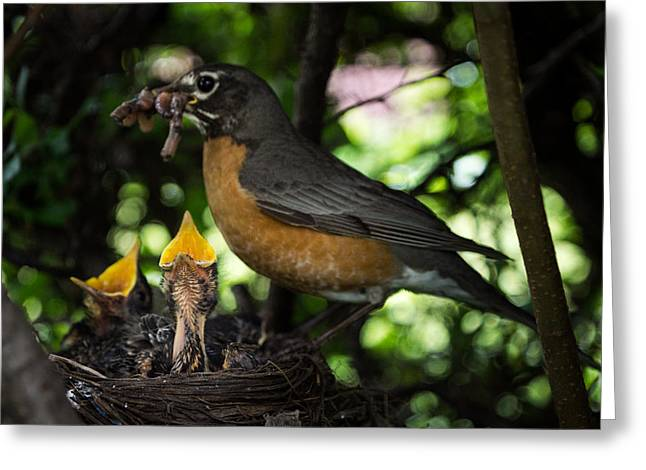 Feeds Chicks Greeting Cards - Supper Time Greeting Card by Chris Bordeleau