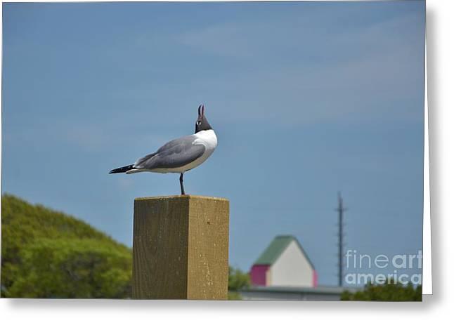 Docked Sailboats Greeting Cards - Surf City NC Sea Birds - 1 Greeting Card by Bob Sample