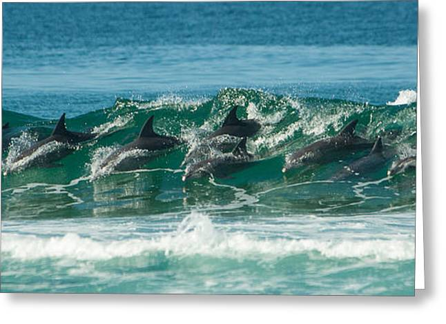 Best Sellers -  - Ocean Mammals Greeting Cards - Surfing Dolphins 4 Greeting Card by Alistair Lyne