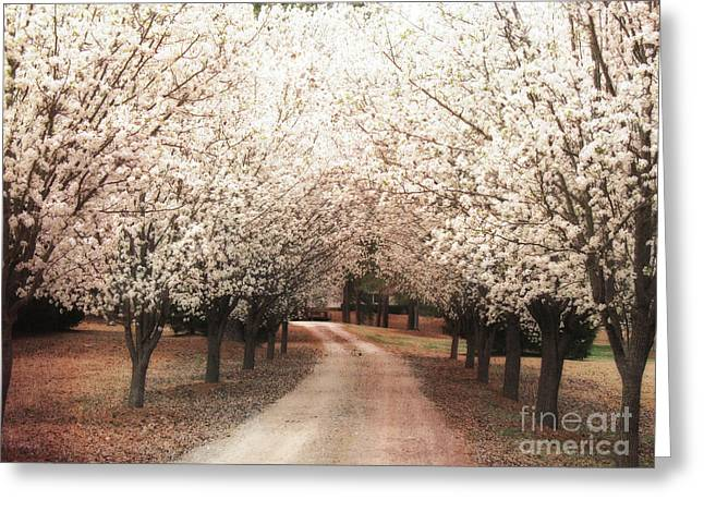 Fantasy Tree Photographs Greeting Cards - Surreal Dreamy Dogwood Trees South Carolina Greeting Card by Kathy Fornal