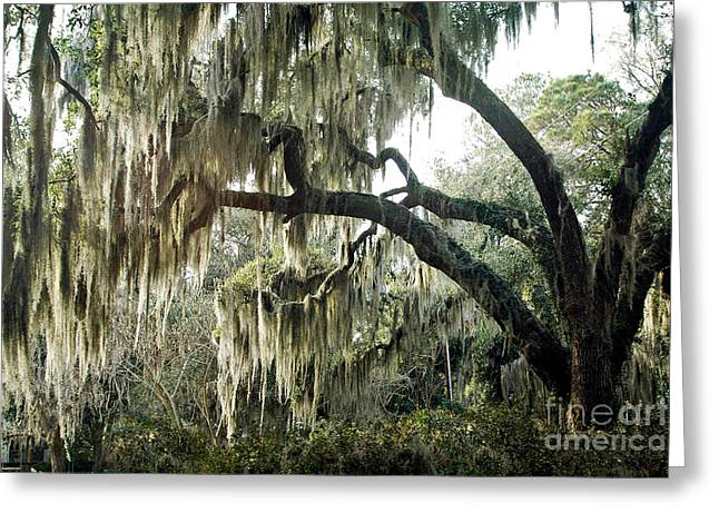 Surreal Gothic Savannah Georgia Trees With Hanging Spanish Moss Greeting Card by Kathy Fornal