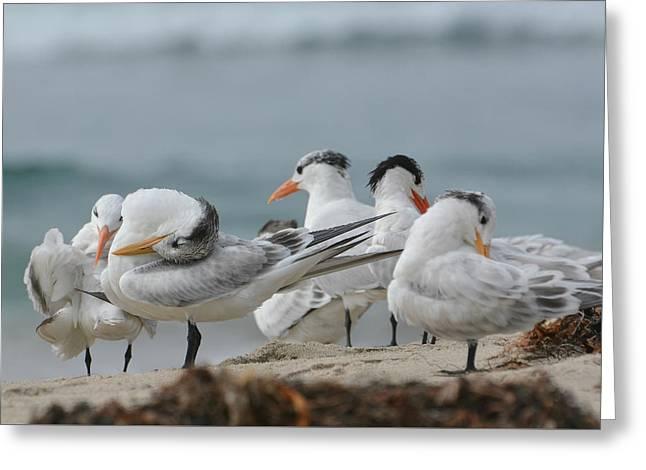 Tern Greeting Cards - Surrender To Slumber Greeting Card by Fraida Gutovich