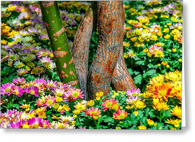 Colors Of Autumn Greeting Cards - Surrounded Greeting Card by Az Jackson