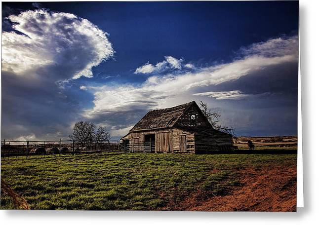March Greeting Cards - Surviving the Storms Greeting Card by Toni Hopper