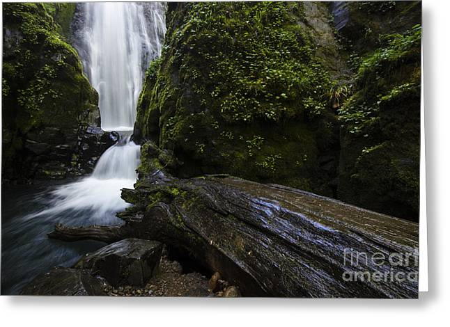 Moss Greeting Cards - Susan Creek Falls Oregon 3 Greeting Card by Bob Christopher