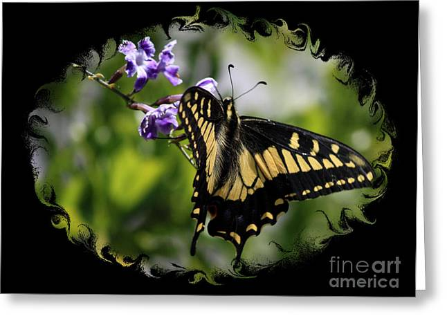 Spring Scenes Greeting Cards - Swallowtail Butterfly 2 with Swirly Framing Greeting Card by Carol Groenen