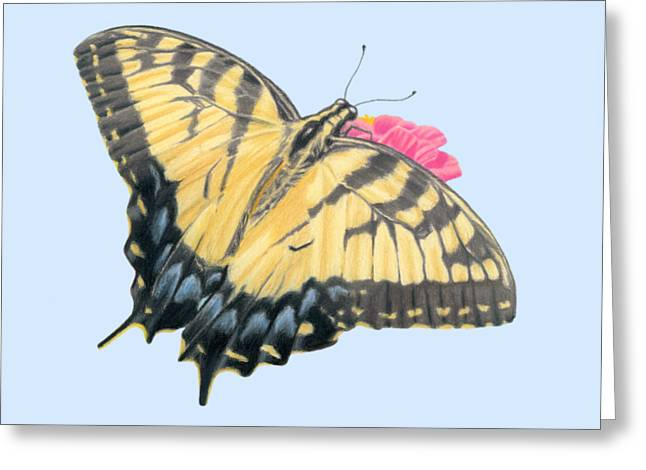 Swallowtail Butterfly And Zinnia- Transparent Backgroud Greeting Card by Sarah Batalka