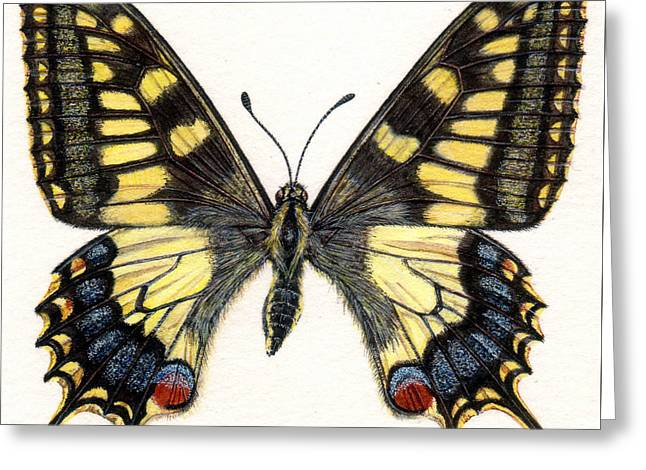 Swallowtail Greeting Cards - Swallowtail Butterfly Greeting Card by Rachel Pedder-Smith