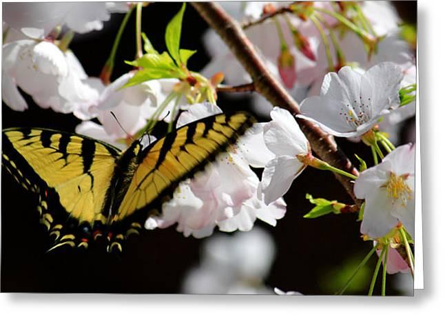 Swallowtail Greeting Card by Nathan Grisham