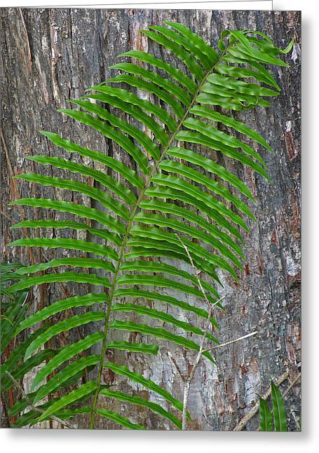 Swamp Fern Greeting Card by Juergen Roth