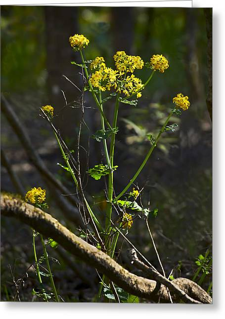 Swamp Flowers Greeting Card by Bill Chambers