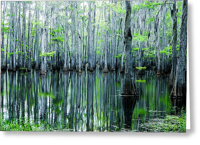 Best Sellers -  - Alga Greeting Cards - Swamp in Louisiana Greeting Card by Ester  Rogers