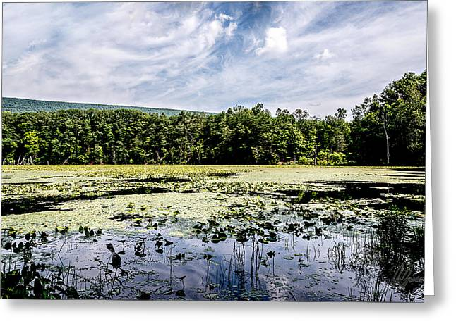 Water Lilly Greeting Cards - Swamp Lake and Beautiful Blue Skies Greeting Card by Joshua Zaring