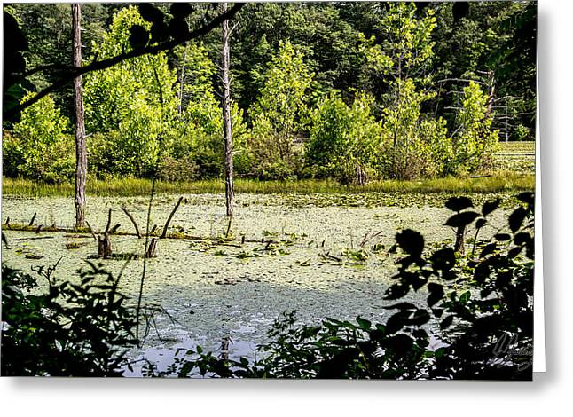 Alga Greeting Cards - Swamp lake covered in lily pads Greeting Card by Joshua Zaring