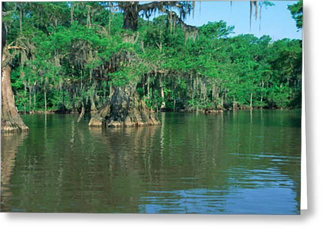 Panoramics Greeting Cards - Swamp, Louisiana Greeting Card by Panoramic Images