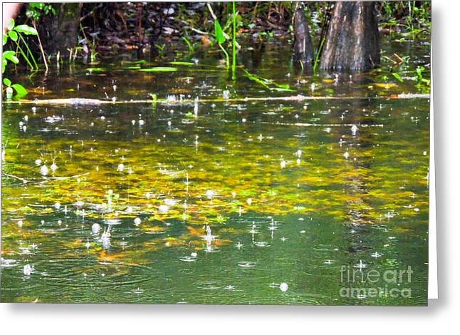 Alga Greeting Cards - Swamp Raindrops Greeting Card by Marilee Noland