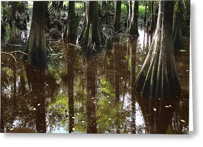 Florida Swamp Reflection Greeting Cards - Swamp Reflections Greeting Card by Joseph G Holland
