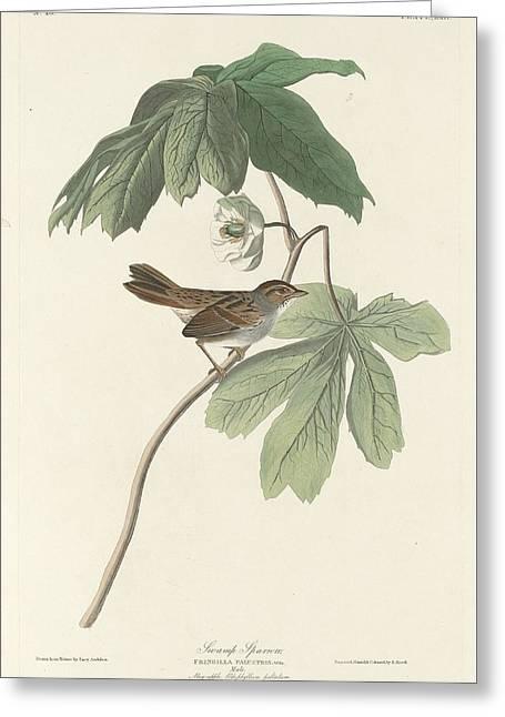 Small Birds Greeting Cards - Swamp Sparrow Greeting Card by John James Audubon