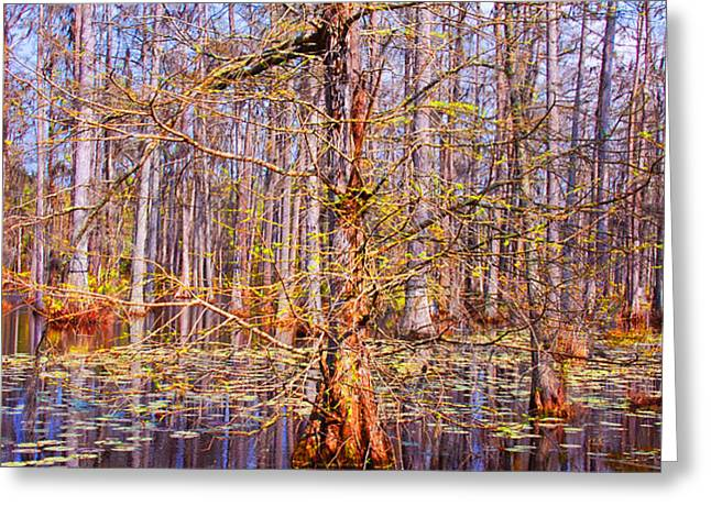 Swamp Tree Greeting Card by Susanne Van Hulst