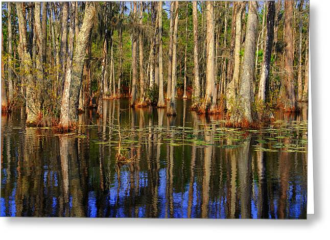 Swamp Trees Greeting Card by Susanne Van Hulst