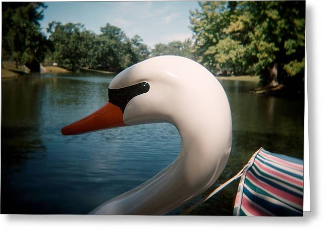 Toy Boat Greeting Cards - Swan Boat Greeting Card by Andre Brown