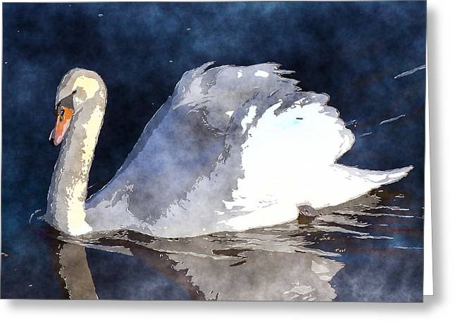 Swans... Greeting Cards - Swan Greeting Card by David G Paul