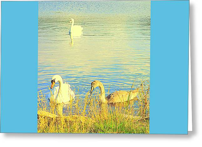 Sweating Greeting Cards - Swan E  Greeting Card by Hilde Widerberg