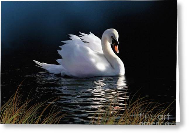 Swans... Greeting Cards - Swan Elegance Greeting Card by Robert Foster