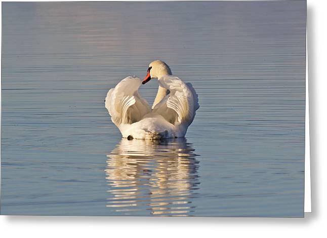 Swan Greeting Card by Eric Sloan