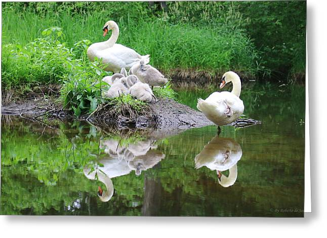 Swans... Greeting Cards - Swan Family Resting  Greeting Card by Roberto De Souza