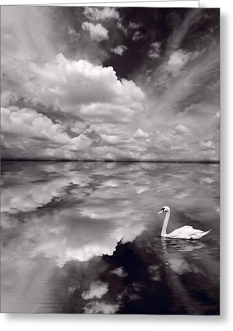 Swan Lake Explorations B W Greeting Card by Steve Gadomski