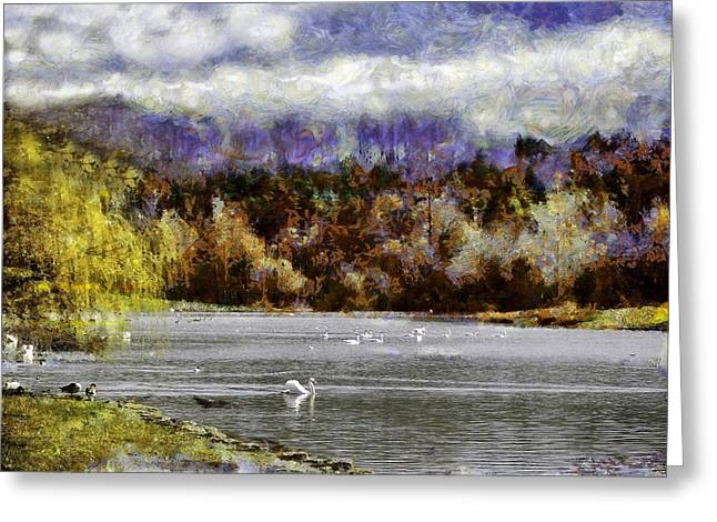 Swans... Greeting Cards - Swan Lake Greeting Card by Jean-Marc Lacombe